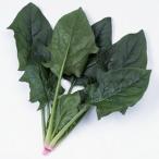 野菜の種/種子 アグレッシブ・ほうれんそう M・3万粒  (大袋)サカタのタネ