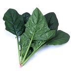 野菜の種/種子 クロノス・ほうれんそう M・3万粒 (大袋)サカタのタネ 種苗