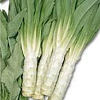 野菜の種/種子 やまくらげ ケルン 茎レタス 10ml(メール便可能)サカタのタネ