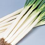 野菜の種/種子 夏扇パワー ねぎ 1dl(メール便可能)サカタのタネ