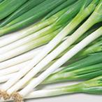 野菜の種/種子 春扇 ねぎ 20ml(メール便可能)サカタのタネ