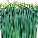 野菜の種/種子 テンダーポール 花ニラ 20ml(メール便可能)サカタのタネ