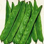 野菜の種/種子 ジャンビーノ つるありいんげん 1dl(メール便可能)サカタのタネ
