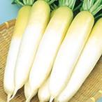 野菜の種 種子 冬自慢 大根 10ml サカタのタネ 種苗
