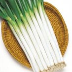 野菜の種/種子 ホワイトスター・根深ねぎ 1dl袋(メール便発送)タキイ種苗