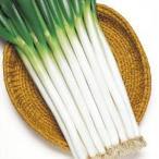 野菜の種/種子 ホワイトスター・根深ねぎ 20ml(メール便発送)タキイ種苗