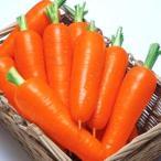 野菜の種/種子 夏紅五寸・ニンジン にんじん 人参 20ml(メール便発送)タキイ種苗