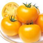 野菜の種/種子 桃太郎ゴールド・トマト 1000粒(メール便発送/大袋)タキイ種苗