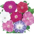 花の種(営利用)アサガオ 朝顔 暁の混合 1000粒 プライマックス種子 サカタのタネ 種苗