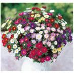 花の種(営利用)マイクロアスター エゾギク ステラ ミックス 1000粒 フィルムコート種子 サカタのタネ