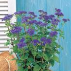 花の種(営利用)アゲラタム カッコウアザミ トップブルー 1000粒 ペレット種子 サカタのタネ