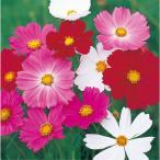 花の種(営利用)コスモス センセーション ミックス 1l サカタのタネ 種苗