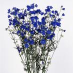花の種(営利用)デルフィニウム ヒエンソウ プデル ブルー 1000粒 サカタのタネ