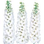 花の種(営利用)デルフィニウム ヒエンソウ キャンドル ホワイト 1000粒 サカタのタネ