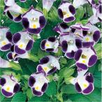 営利用(営利栽培家・営利生産者様用)花の種