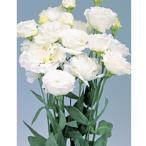 花の種(営利用)トルコギキョウ ユーストマ、リシアンサス ボヤージュ(R)(1型)ホワイト 3000粒 プライマックスペレット種子 サカタのタネ 種苗