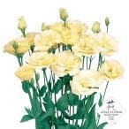 花の種(営利用)トルコギキョウ ユーストマ、リシアンサス シュークリーム 3000粒 ペレット種子 サカタのタネ 種苗(メール便発送)