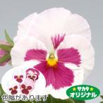 花の種(営利用)パンジー 三色スミレ パシオ(R) いちごみるく 1000粒 プライマックス種子 サカタのタネ