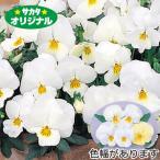 花の種(営利用)パンジー 三色スミレ よく咲くスミレ ミルクセーキ 500粒 プライマックス種子 サカタのタネ