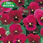 花の種(営利用)パンジー 三色スミレ よく咲くスミレ チェリー 500粒 プライマックス種子 サカタのタネ
