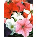 花の種(営利用)ペチュニア イーグル ミックス 1000粒 ペレット種子 サカタのタネ