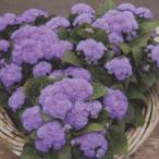 花の種(営利用)アゲラタム F1アロハ ブルー 1000粒 ペレット種子 タキイ種苗