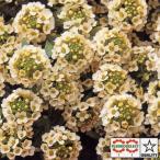 花の種(営利用)アリッサム アフロダイテ レモン 10ml タキイ種苗