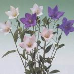 花の種(営利用)桔梗 さみだれ 混合 1dl タキイ種苗