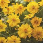 花の種(営利用)コスモス 矮性種 ドワーフ イエロー 1dl タキイ種苗(メール便発送)