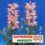 花の種(営利用) サルビア コクシネア種 コーラル ニンフ 1ml タキイ種苗