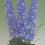 花の種(営利用) デルフィニウム エラータム種 F1オーロラ ライトブルー 10ml タキイ種苗