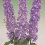 花の種(営利用) デルフィニウム エラータム種 F1オーロラ ラベンダー 10ml タキイ種苗