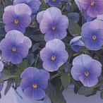 花の種(営利用) F1ビビ系 F1ビビ クリアライトブルー 1000粒×10 タキイ種苗