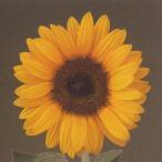 花の種(営利用)F1サンリチ ひまわり 55日タイプ F1サンリチ オレンジ 1000粒×10 タキイ種苗