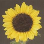 花の種(営利用)F1サンリチ ひまわり 45日タイプ F1サマーサンリッチ パイン45 1000粒 タキイ種苗(メール便発送)