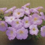花の種(営利用)ペチュニア F1ディーバ ラベンダーピンク(TX-676)1000粒 ペレット種子 タキイ種苗(メール便発送)