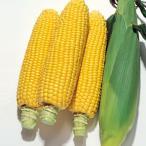 野菜の種/種子 キャンベラ86・とうもろこし トウモロコシ 100粒(メール便発送)タキイ種苗