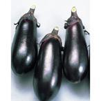 野菜の種/種子 黒福・ナス 茄子 なす 20ml(メール便発送/大袋)サカタのタネ 種苗