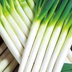 野菜の種/種子 名月一文字 根深ねぎ 1dl(メール便発送)タキイ種苗