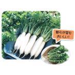 野菜の種/種子 湘白大根 ダイコン 1dl(メール便発送)