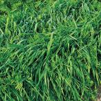 らい麦+ヘアリーベッチ(2種混合種子)まめむぎマルチ 1kg 緑肥/景観用作物/種 タキイ種苗