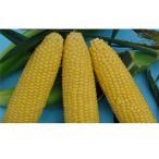 野菜の種/種子 Sweets恵味スマイル・とうもろこし トウモロコシ 2000粒  (大袋)