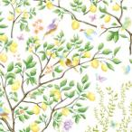 �ݡ����顼�� ž�̻� �ե롼�� - LEMON TREES (����ĥ)