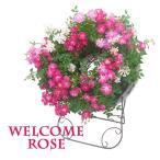 ウェルカム ローズ スタンド付き  レンゲ ローズ 寄せ植え 母の日 花 フラワー ギフト ピンク ホワイト 台座 薔薇 バラ