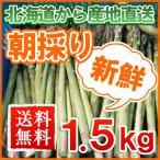 蘆筍 - アスパラ 朝採り 北海道産 1.5kg (M〜2L) お取り寄せ お土産 ギフト お歳暮 御歳暮