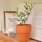 観葉植物 オリーブ 陶器 鉢植え お取り寄せ お土産 ギフト プレゼント 特産品 名物商品 母の日 おすすめ