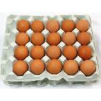 島根県 生卵 しまづのこだわり卵 赤卵40個入り 代引き不可 お取り寄せ お土産 ギフト バレンタイン