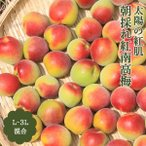青梅 紅南高梅 3kg L-3Lサイズ 秀品 紀州 和歌山 朝採れ紅南高梅 送料無料