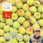 青梅 南高梅 1kg 自然栽培 サイズ無選別 優品 紀州 和歌山 岡本さんの自然農法南高梅 無農薬 無肥料