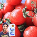 ミニトマト 2kg 甘い 高糖度 和歌山県 田口さんの濃い朝採れキャロルセブン 送料無料